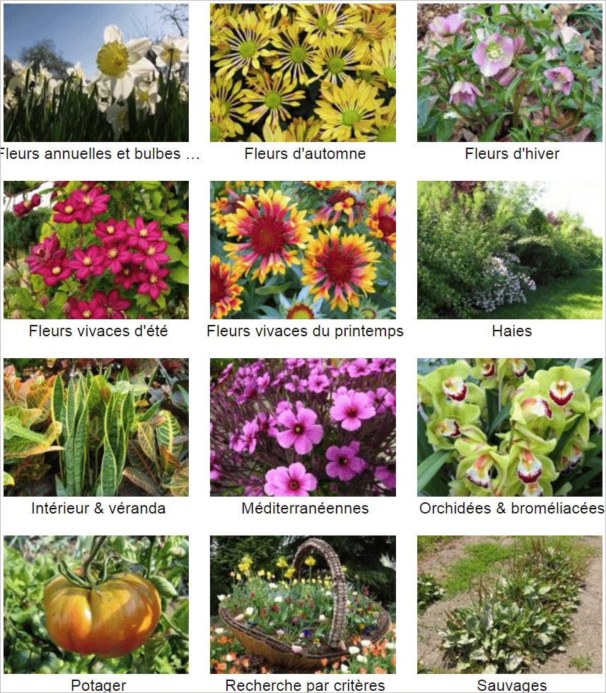 plantes-au-jardin-2
