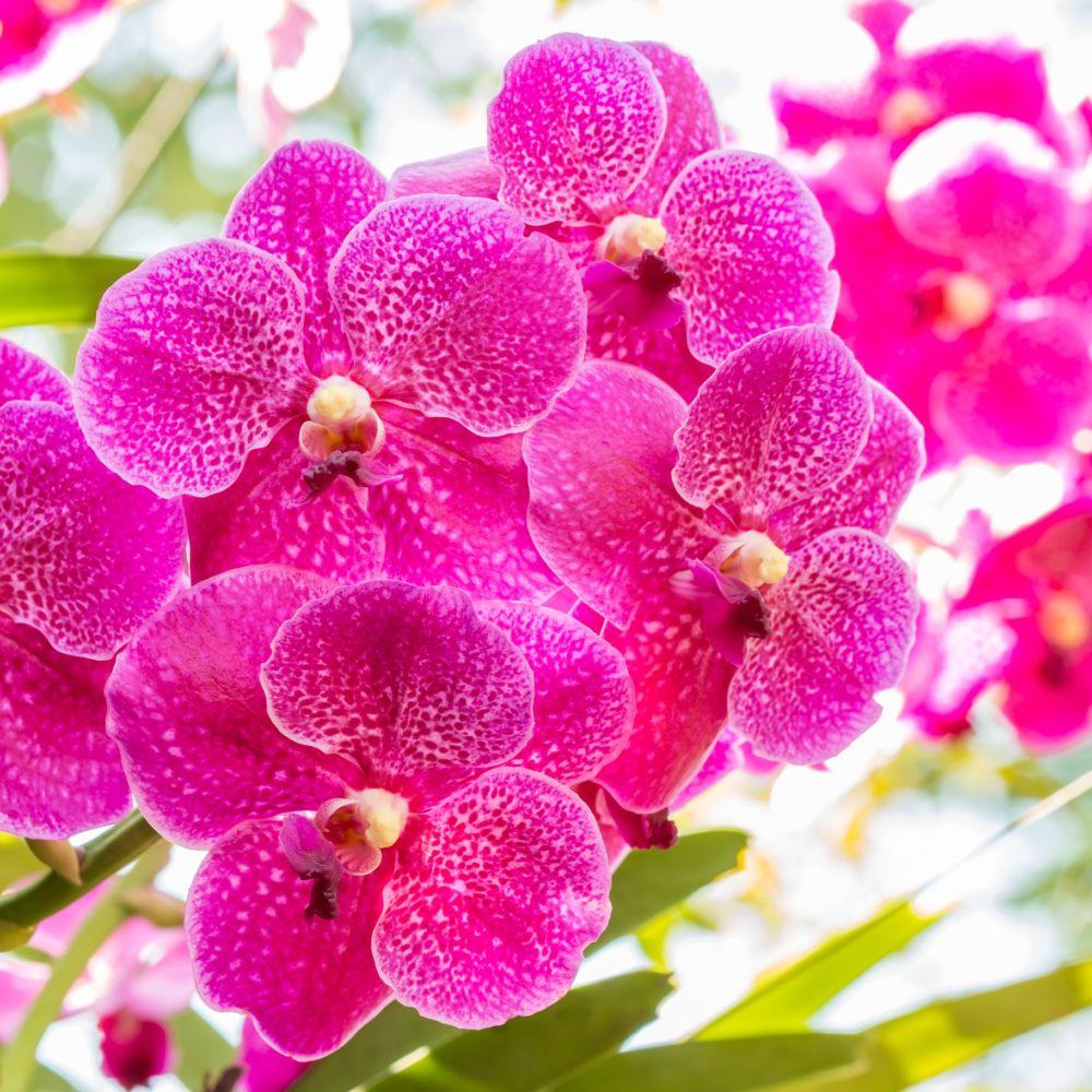Une fleur d'orchidée de couleur rose